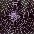 Las arañas afinan sus redes como las cuerdas de una guitarra