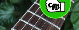 CITES levanta el veto al palorrosa en instrumentos, partes y accesorios terminados