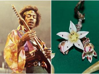 Bautizan a una planta con el nombre de Jimi Hendrix