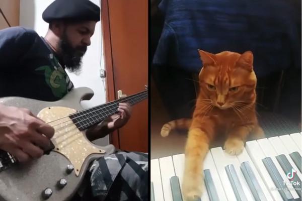 ¿Falta de inspiración? Este bajista la encontró en un gato ruso que toca el piano